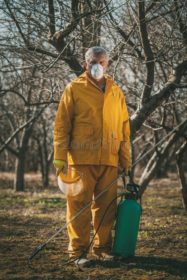 Spraying In The Orchard. Mature man with mask spraying tree with chemicals in the orchard before winter. Looking at camera stock images