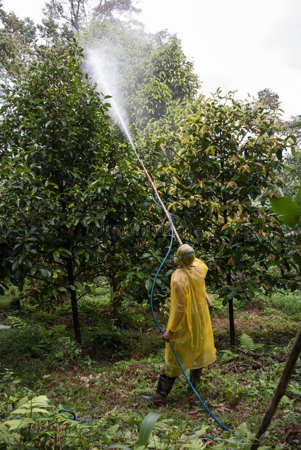 Spraying pesticide. Farmer spraying pesticide on orchard stock image