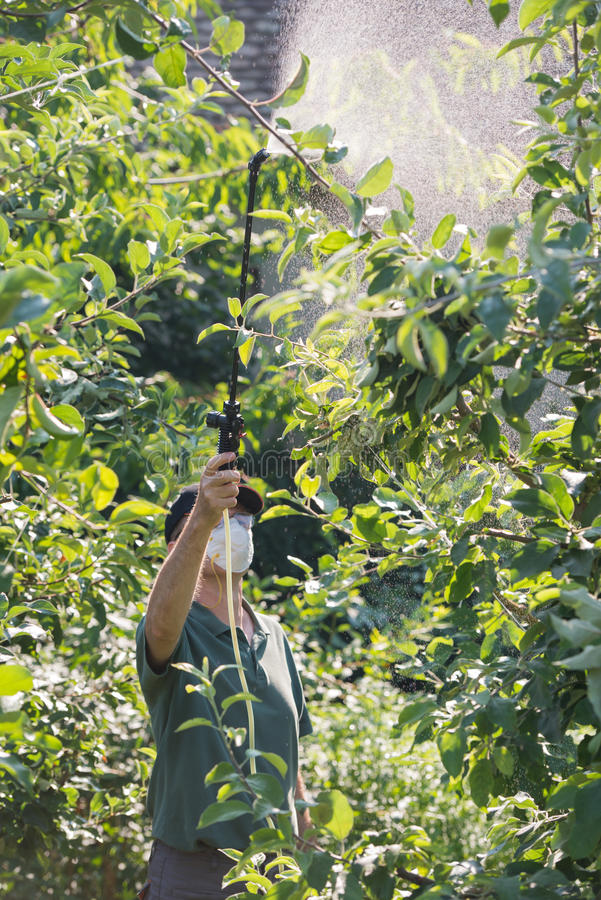 Spraying pesticide on fruit trees. Worker spraying pesticide on fruit trees stock photos