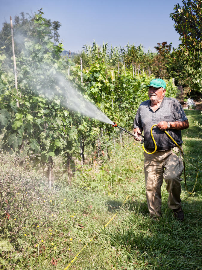 Spraying pesticide in vineyard royalty free stock photography