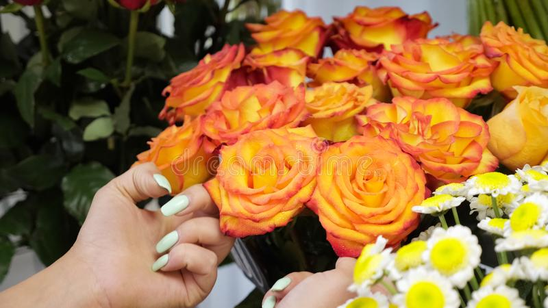 Spraying roses with water from a sprayer in flower shop, closeup view. Care of plants in floristry studio. Spraying red and orange roses with water from a royalty free stock image
