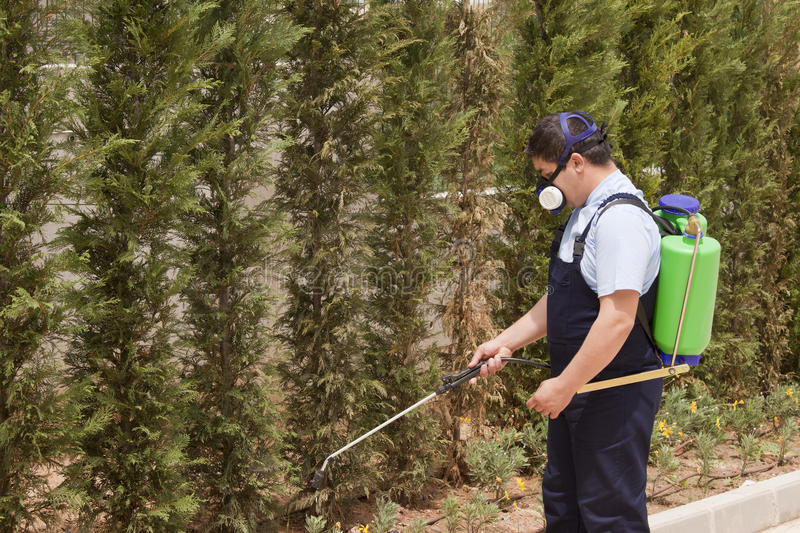 Spraying trees- pest control stock photos