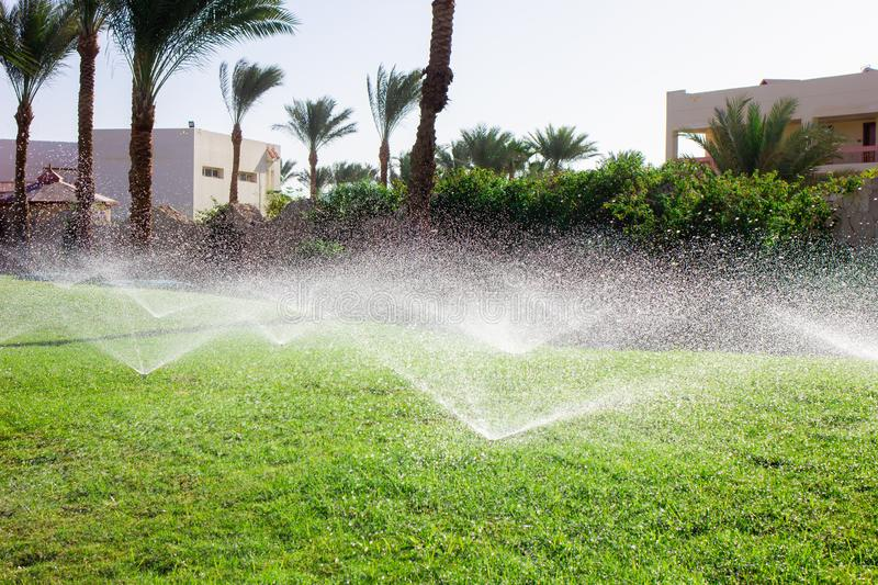 Spraying water on the lawn. Watering grass on a hot summer day. Spraying water on the lawn. Lawn care royalty free stock photos