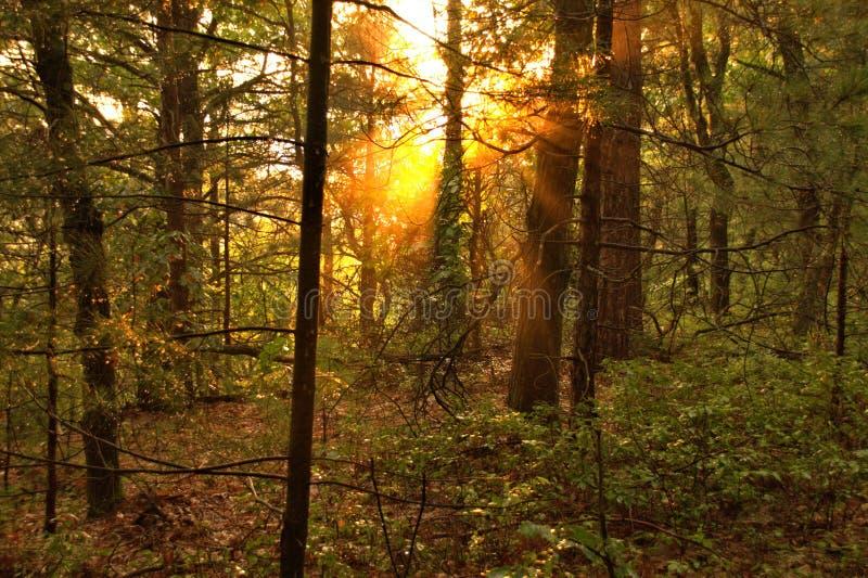 Sprazzo di sole al monticello di Levis immagini stock libere da diritti