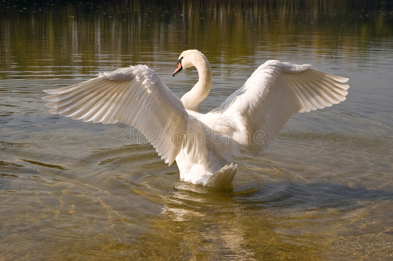 Spread wings royalty free stock photography