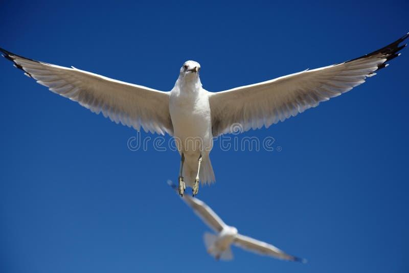 Spreid de vleugels uit stock foto's