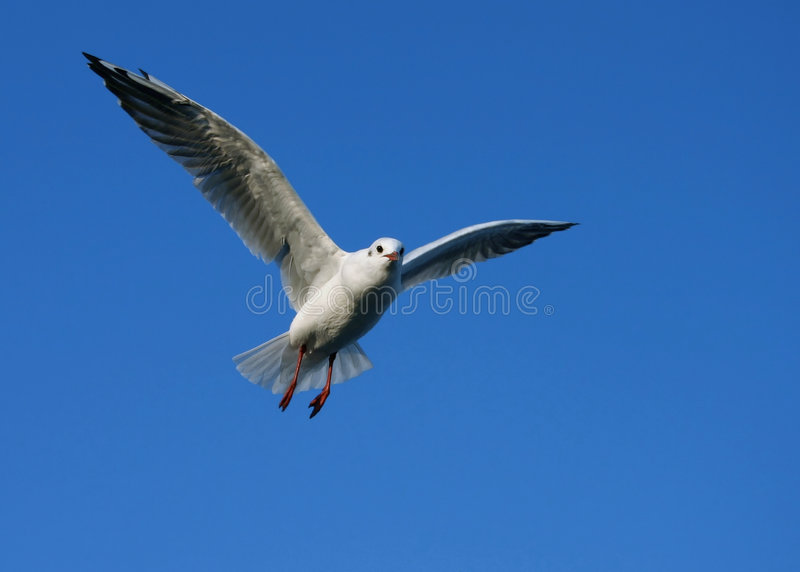 Spreid uw vleugels #5 uit royalty-vrije stock afbeeldingen