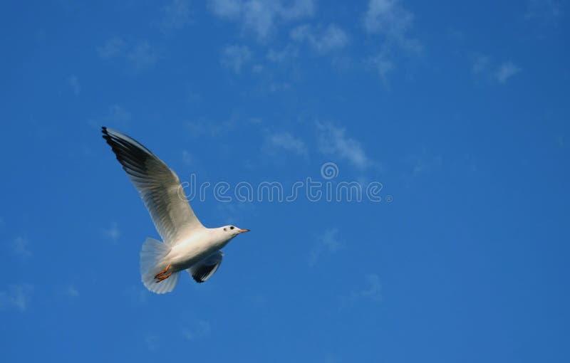 Spreid uw vleugels #6 uit stock fotografie