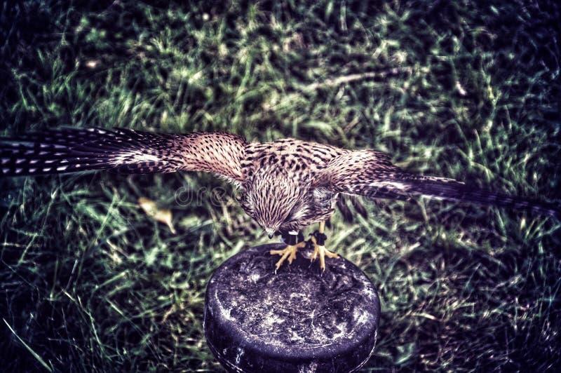 Spreid uw vleugels uit royalty-vrije stock foto