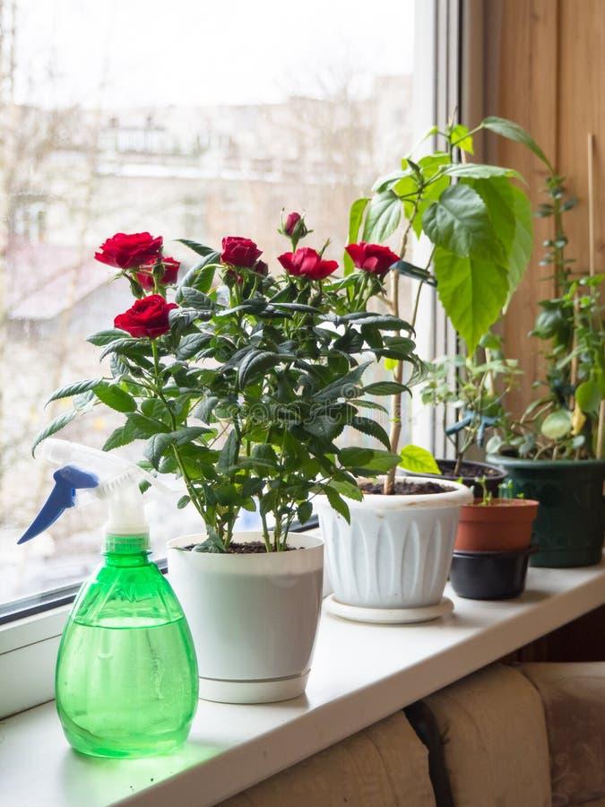 Sprej på fönstret med krukor av blommor arkivbilder