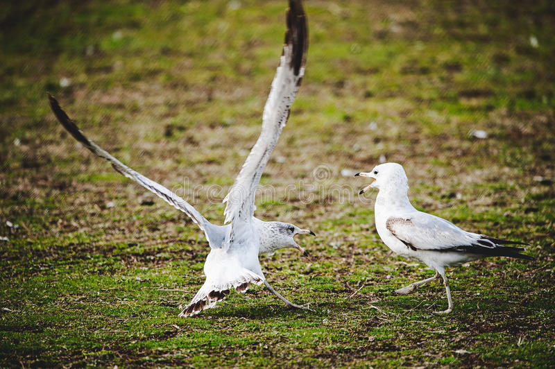 Sprekende vogel stock fotografie
