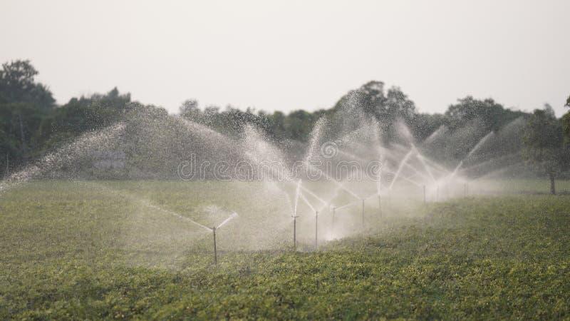 Sprenkelinstallatie in landbouwbedrijf stock foto