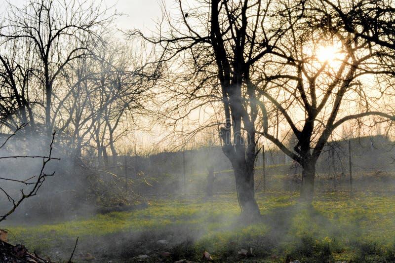 Sprickor av fruktskället i dimma royaltyfri fotografi