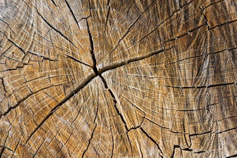 Sprickor i trä royaltyfri foto