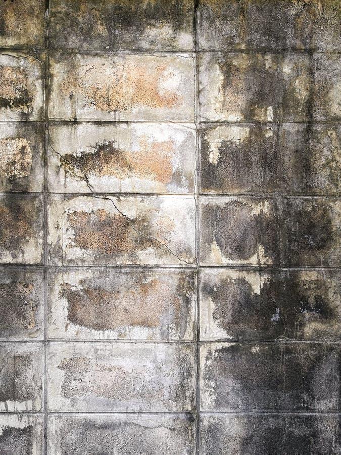 Sprickor på väggarna av gamla byggnader skadas Blöta med mossa fotografering för bildbyråer