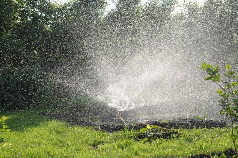 Spridare som bevattnar gräs i trädgård vridning av vattenfärgstänk, automatisk gräsmattaomsorg, personligt bevattningsystem i rad fotografering för bildbyråer