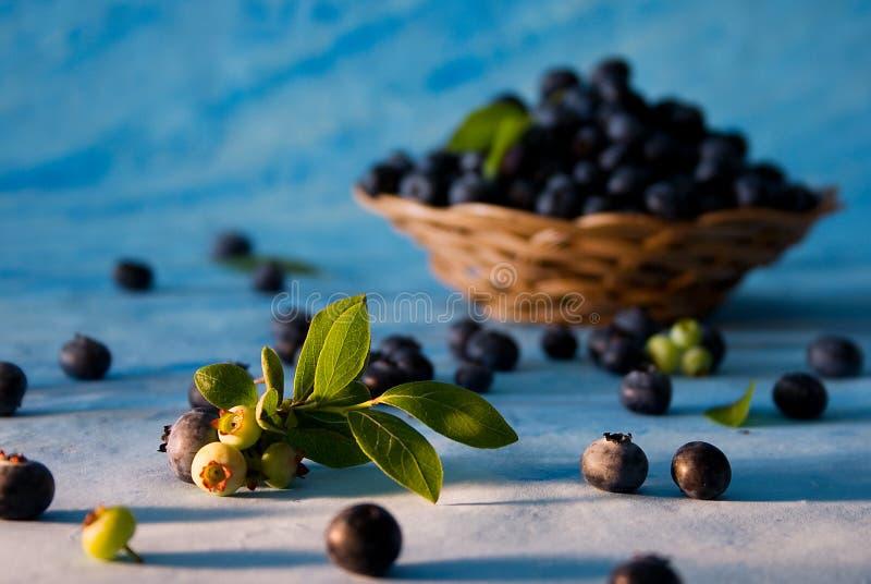 Download Spridda bluberries arkivfoto. Bild av bär, sommar, sunt - 287290