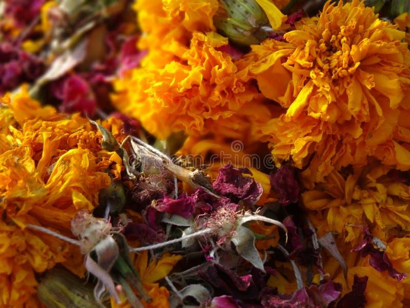 Spridda gula och röda rosor royaltyfria bilder