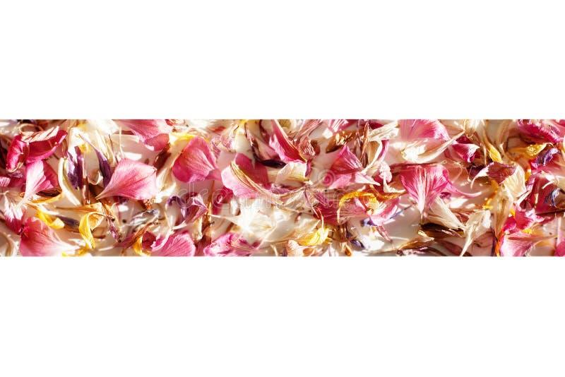 Spridda kulöra blommakronblad gränsar på suddigt bakgrundsslut upp, ramen för fokusen för delikata blommakronblad den mjuka arkivfoto