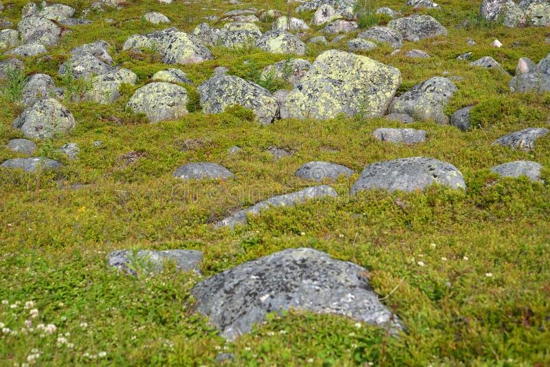 Spridningar av stenar i tundran i norden av Kola Peninsula arkivbilder