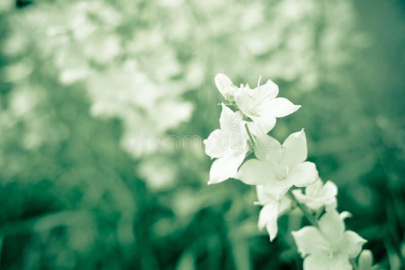 Sprig белых цветков стоковая фотография