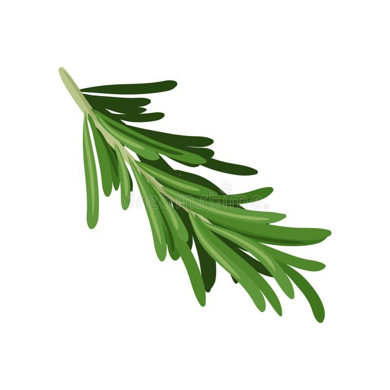 Sprig зеленого розмаринового масла Кулинарная трава варить специю Органический ингридиент для приправляя блюд Плоский дизайн вект иллюстрация штока