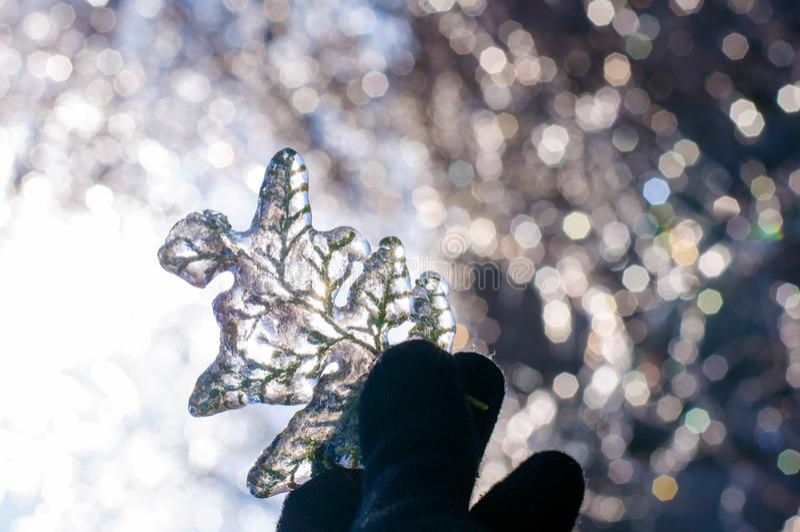 Sprig игл сосны во льду, заморозке, bokeh стоковое фото