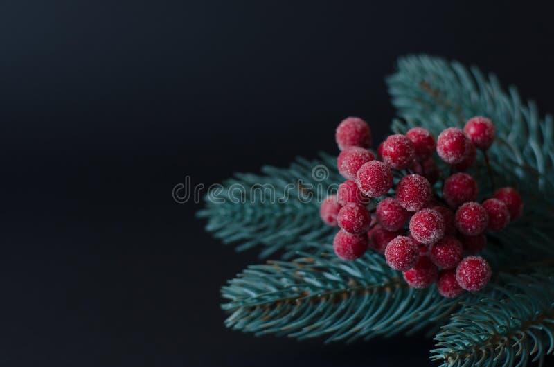 Sprig choinki z czerwonymi jagodami fotografia stock