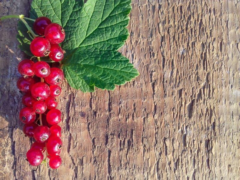 Sprig dojrzały i soczysty czerwony rodzynek z liściem na drewnianym tle S?odkie lato jagody kosmos kopii zdjęcie stock