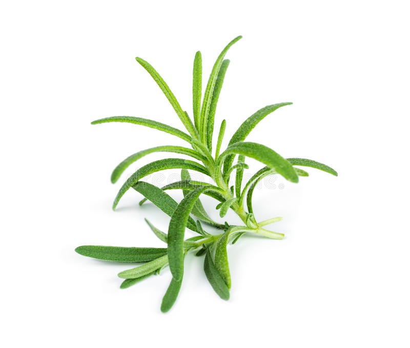 Sprig of fresh rosemary stock photos
