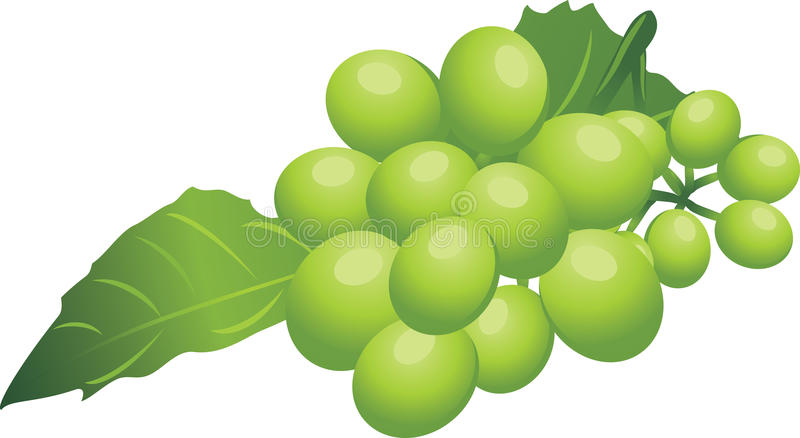 Sprig Of Green Grape Royalty Free Stock Images
