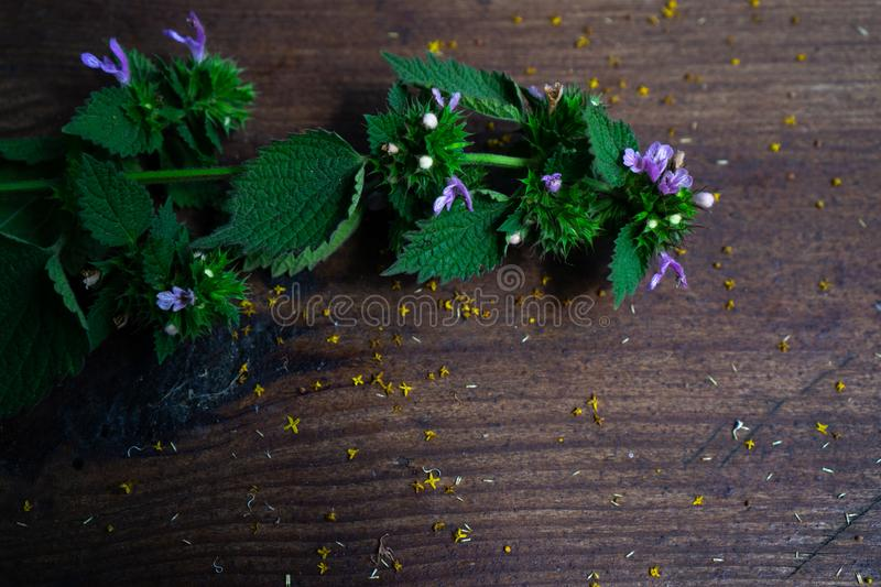 A sprig of green wild mint with lilac flowers is on a dark wooden surface royalty free stock photos