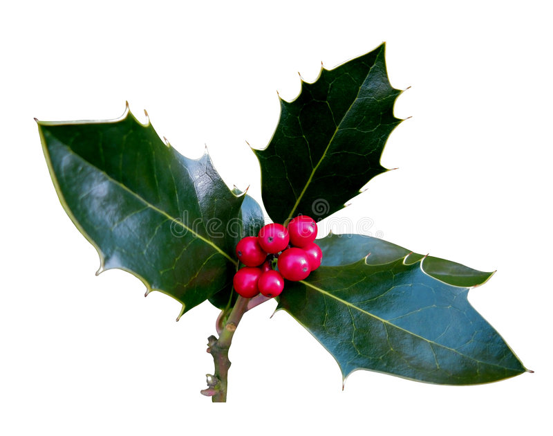 Sprig Of Holly Royalty Free Stock Photos