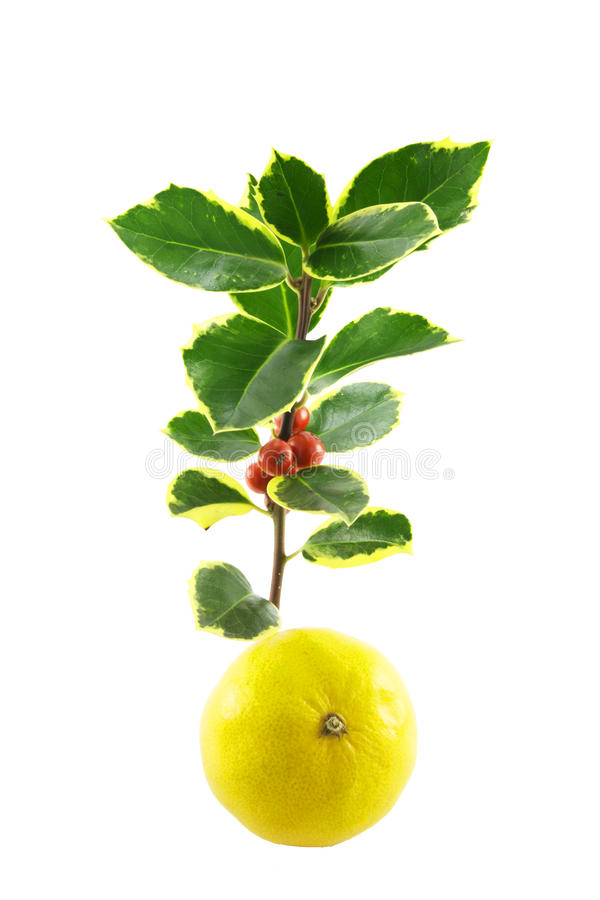 Download Sprig of Holly and Satsuma stock image. Image of decoration - 11461989