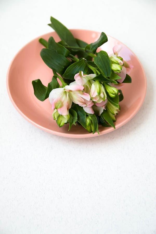 Sprig kwiaty kłama, na różowi talerza na białym tle zdjęcia royalty free
