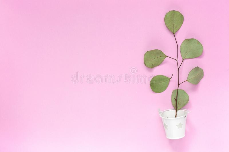 Sprig with leaves in a white bucket on a plain pink background with an area for text copyspace, topview, mockup, flatlay.  royalty free stock photo