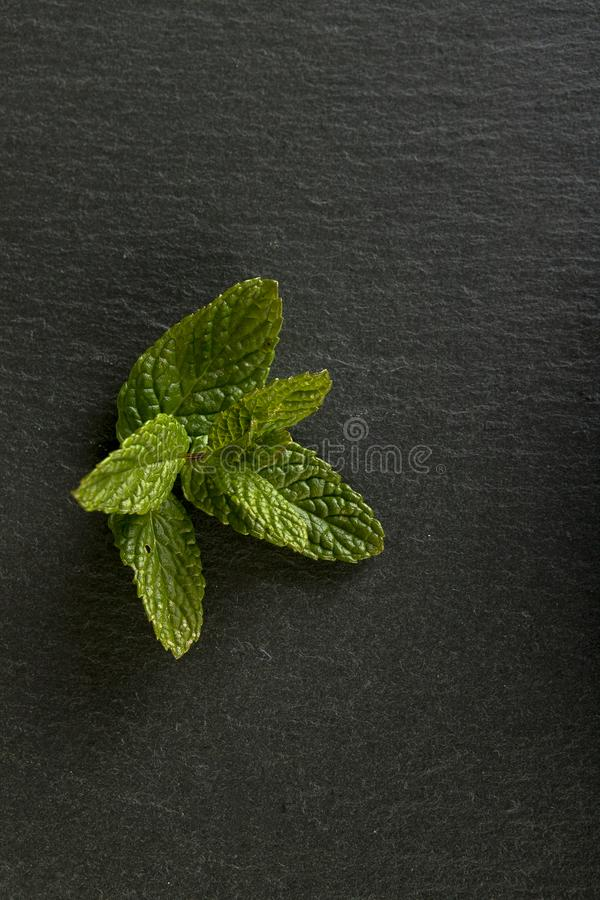 Sprig of mint. To flavor in the kitchen royalty free stock image