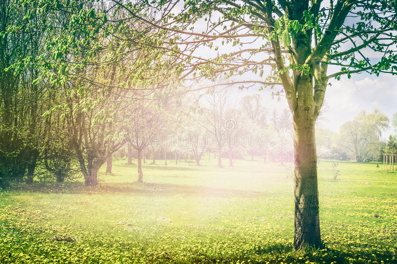 Sprig natury tło w parku lub ogródzie z kwitnąć owocowych drzewa obrazy royalty free