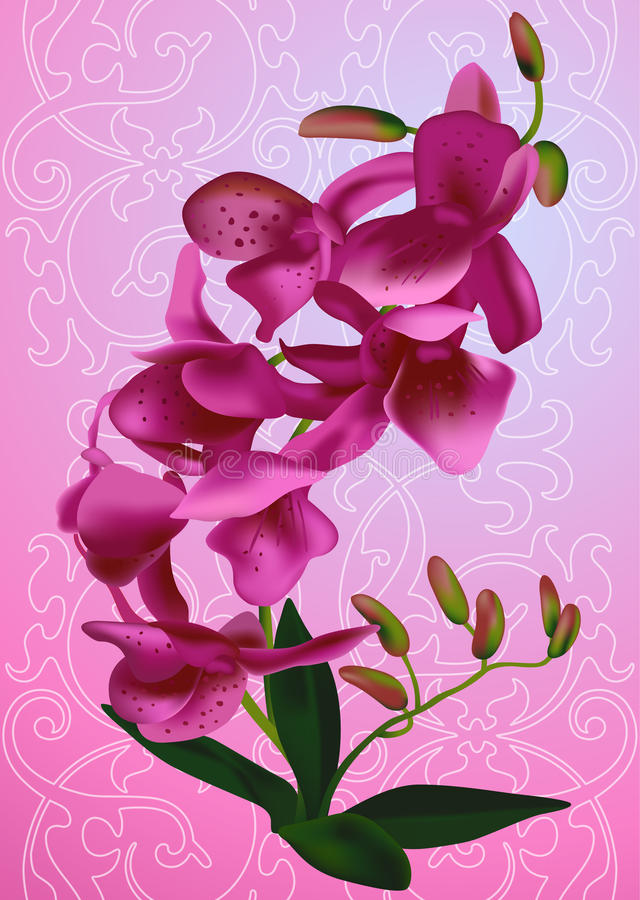 Download Sprig orchid stock vector. Illustration of leaves, plant - 25891777