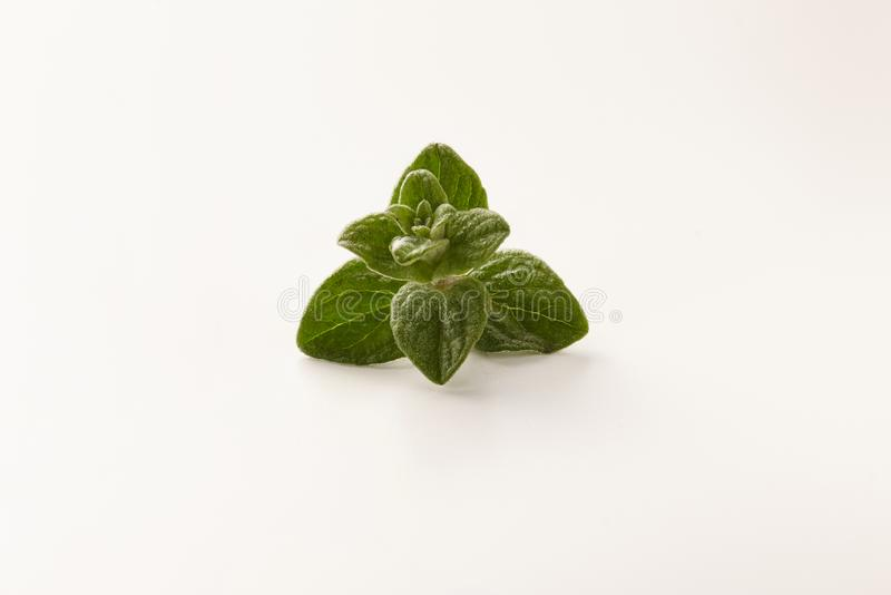 Sprig of oregano with a drop of water. royalty free stock photos