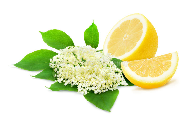 Sprig of sambucus and lemons. Sprig of sambucus with green leaves and half of lemon isolated on a white background. Ingredients for syrup. Design element for royalty free stock photos