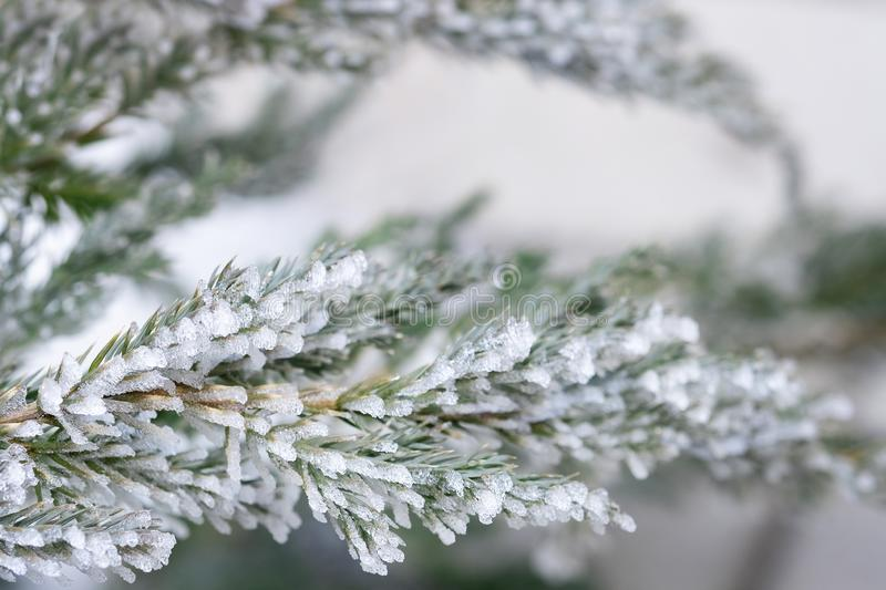 Sprig of spruce in frost. A sprig of spruce in frost. Needles Christmas tree in icicles, winter fairy tale stock photo