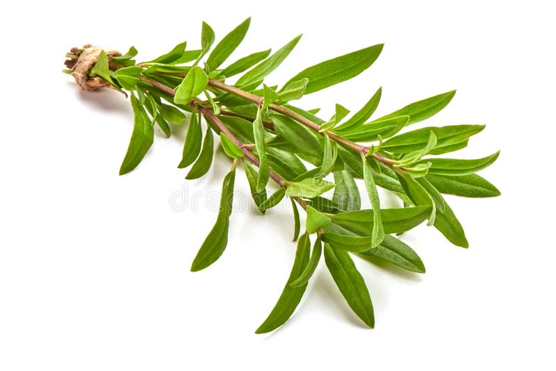 Sprig of thyme, isolated on white background.  royalty free stock photos