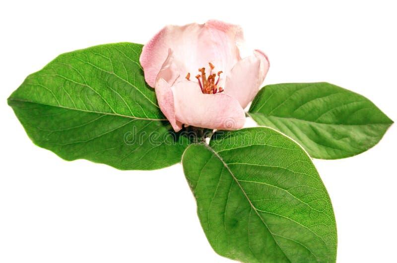 Sprig z kwiatem zdjęcie royalty free