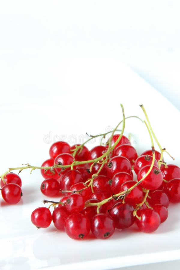 Sprigs Of Red Currents Royalty Free Stock Image