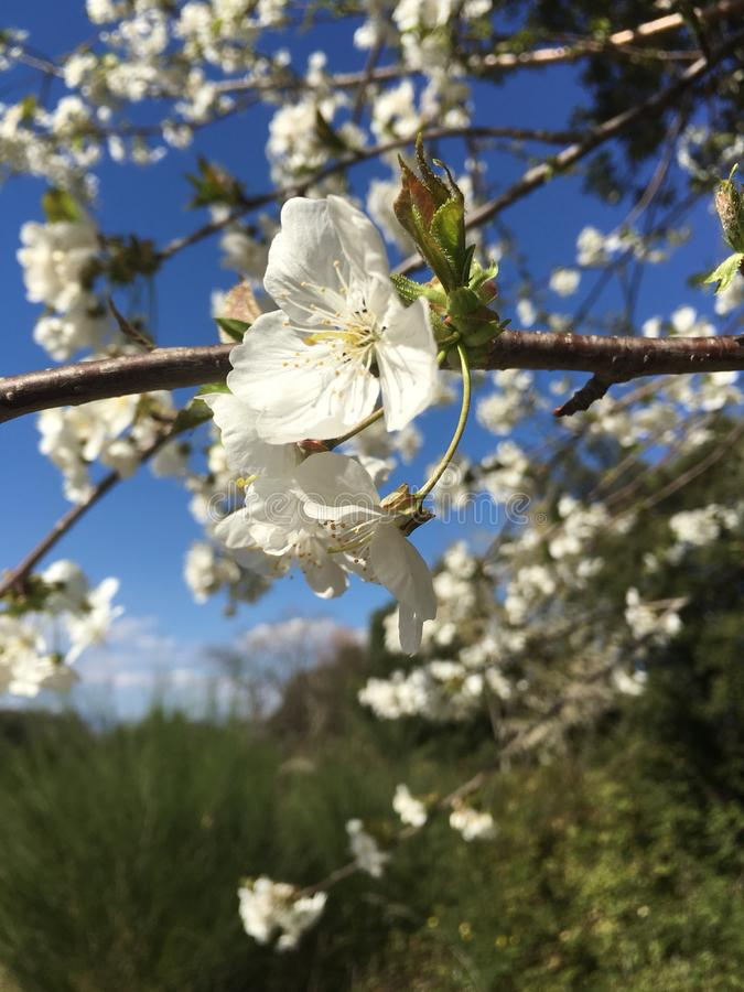 Spring's kwiat fotografia royalty free