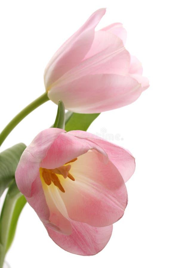 Free Spring Stock Image - 2070641