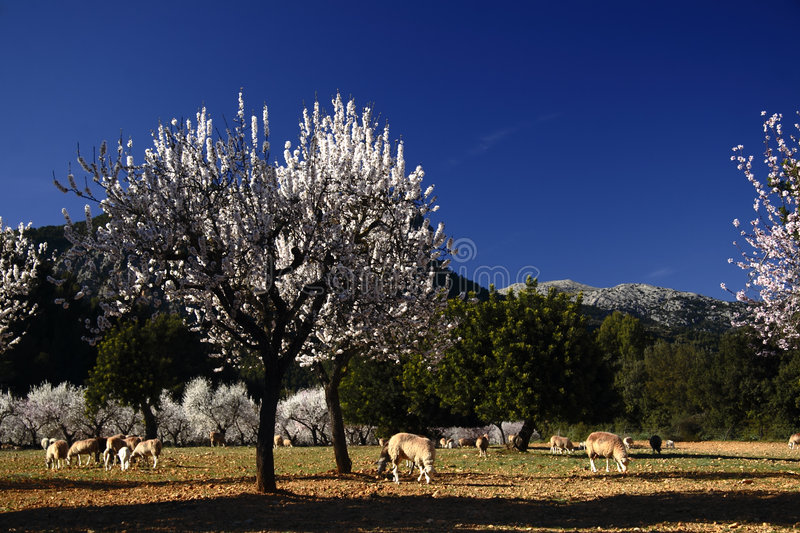 Spring. A horse farm in Majorca, Spain royalty free stock photography