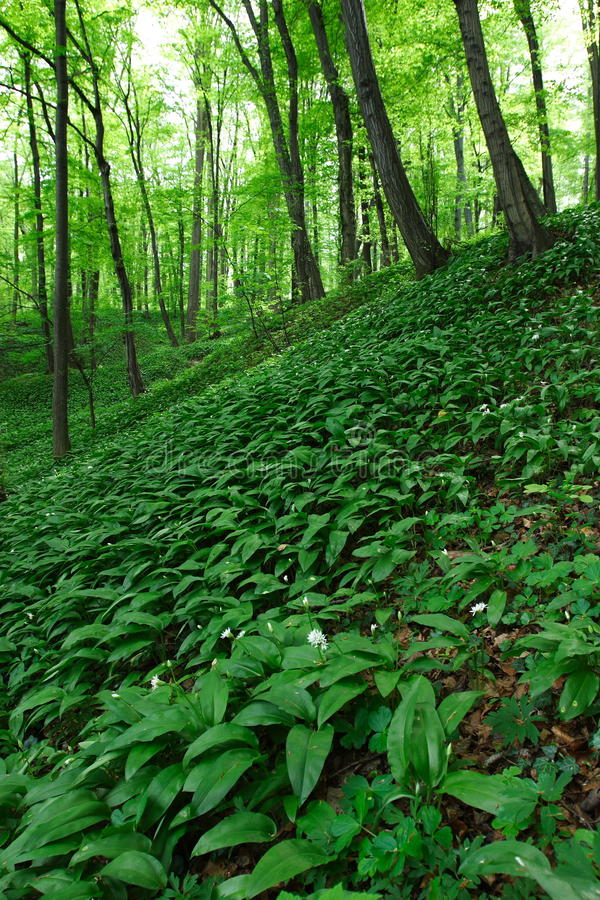Download Spring stock image. Image of jungle, forest, outdoors - 23581293