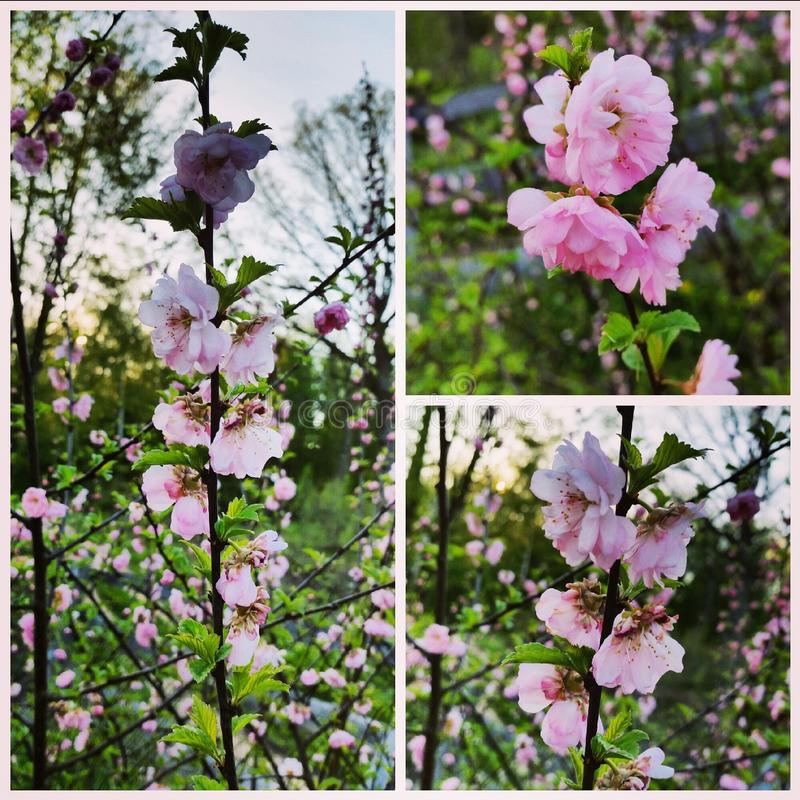 spring'15 免版税库存照片